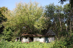 A tree growing out of a house in the abandoned village of Zalissya