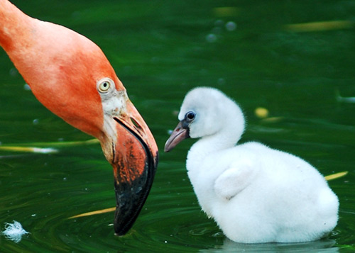 What kind of monster would take away the future of this baby flamingo?