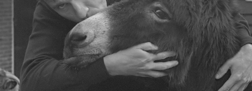 Donkeys, Vondel and Reve