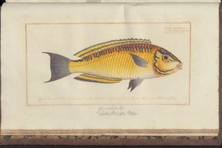 The Murky Waters of Classification. Ordering Fish in Eighteenth-century Europe