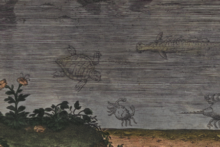 Fish out of Water: Collecting Aquatic Animals in the Early Modern Period